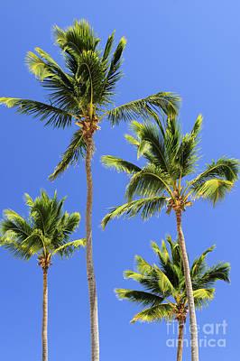 Lush Photograph - Morning Palms by Elena Elisseeva
