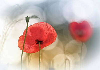 Floral Photograph - Morning Poppies by Steve Moore