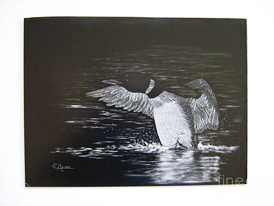 Loon Mixed Media - Morning Preen by Elaine Munro