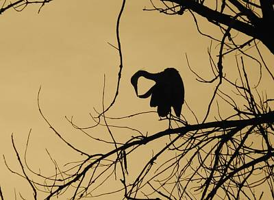 Mark Wagner Wall Art - Photograph - Morning Preen Great Blue Heron by Mark Wagner