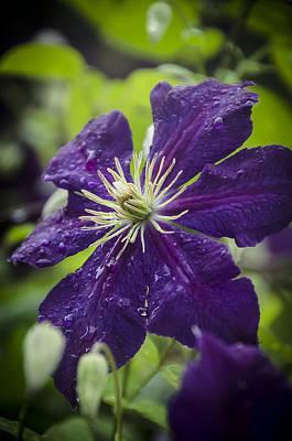 Photograph - Morning Rain by Eric Miller