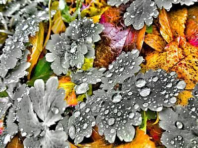 Autumn Leaf Photograph - Morning Rain by Marianna Mills