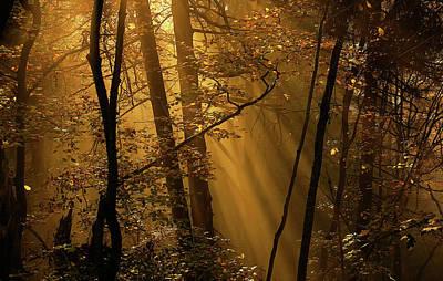 Morning Light Wall Art - Photograph - Morning Rays by Norbert Maier