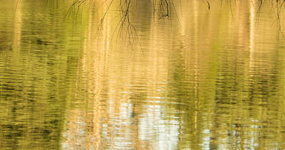 Photograph - Morning Reflections by Marilyn Wilson