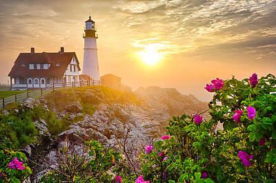 Photograph - Morning Rose by Benjamin Williamson