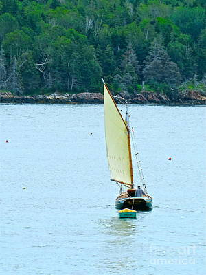 Photograph - Morning Sail  by Nancy Patterson