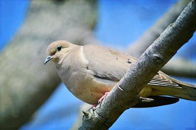 Morning Dove Photograph - Morning Salutations by Fraida Gutovich