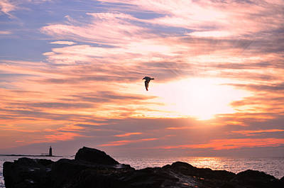 Photograph - Morning Seagull by Emily Stauring