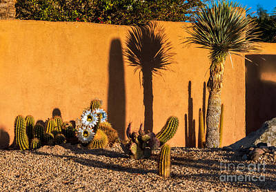 Bloomers Photograph - Morning Shadows by Robert Bales