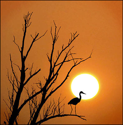 Morning Silhouettes Print by Adrian Campfield