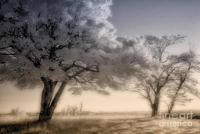 Photograph - Morning Softness II - Blue Ridge Parkway by Dan Carmichael