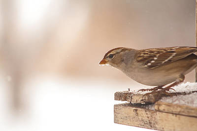 Photograph - Morning Sparrow by Dawn Romine