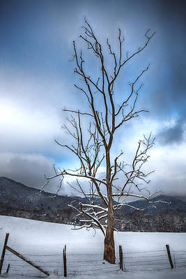 Snowstorm Photograph - Morning Stand by John Haldane