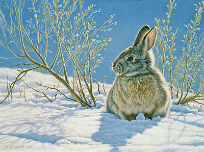 Rabbit Wall Art - Painting - Morning Sun by Paul Krapf