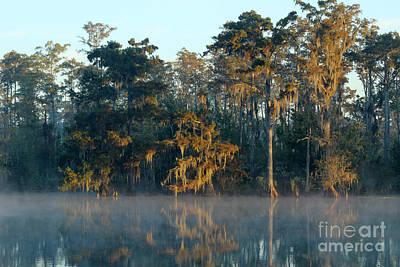 Photograph - Morning Sun by Steven Parker