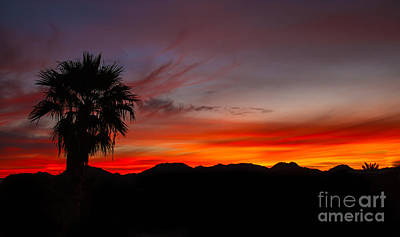 Photograph - Morning Sunrise by Robert Bales