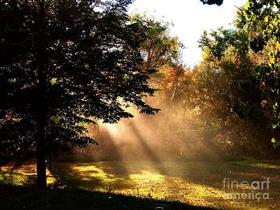 Photograph - Morning Sunshine by Linda Cox