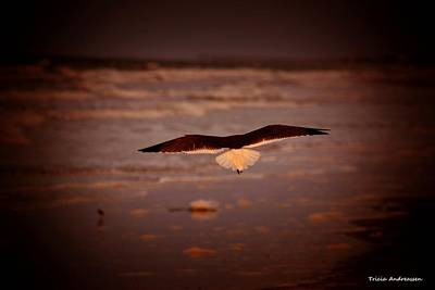 Bird In Flight Photograph - Morning Sweep by Tricia Andreassen