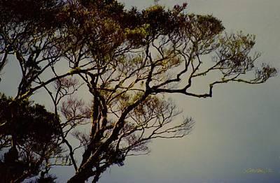 Digital Art - Morning Tree by Jim Pavelle