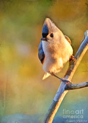 Tufted Titmouse Photograph - Morning Tufted Titmouse  - Digital Paint I  by Debbie Portwood