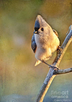 Tufted Titmouse Photograph - Morning Tufted Titmouse by Debbie Portwood