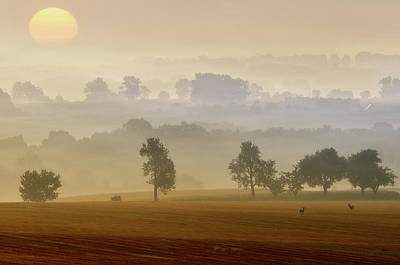 Wild Animals Photograph - Morning View by Piotr Krol (bax)