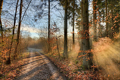 Light Photograph - Morning Walk by EXparte SE