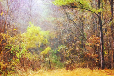 Photograph - Landscape - Trees - Morning Walk In The Woods by Barry Jones