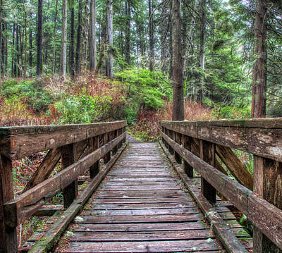 Juan De Fuca Provincial Park Photograph - Morning Walk by James Wheeler