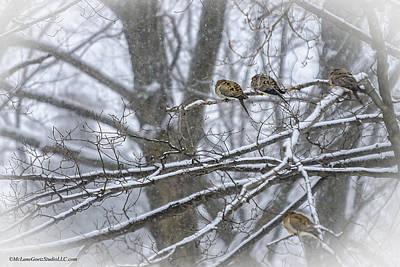 Pigeon Photograph - Morning Winter Storm Doves  by LeeAnn McLaneGoetz McLaneGoetzStudioLLCcom