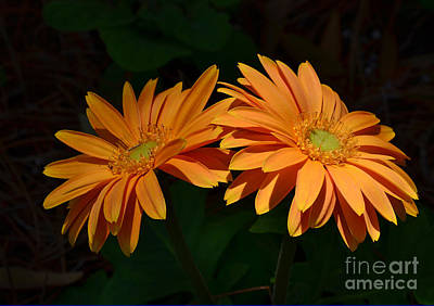 Photograph - Mornings First Light by Kathy Baccari