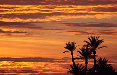 Moroccan Sunset Sky And Palms  Original