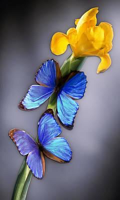 Morpho On Yellow Iris Original by Kirk Ellison