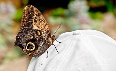 Photograph - Morphos Butterfly On White Baseball Cap Art Prints by Valerie Garner