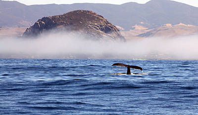 Photograph - Morro Rock Humpback Whale by Michael Peak