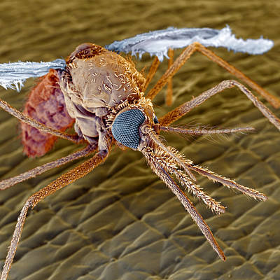 Bloodsucker Photograph - Mosquito by Eye of Science