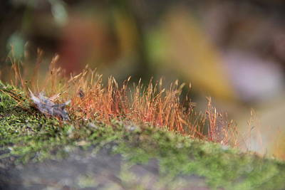 Photograph - Moss by A K Dayton