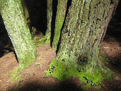 Moss Against The Shadows Art Print