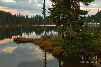 Photograph - Moss And Reflections by Adam Jewell