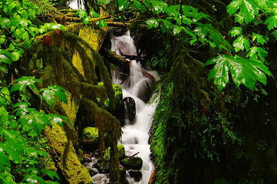 Moss And Water Art Print by Jeff Swan