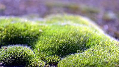 Photograph - Moss Close-up by Ioanna Papanikolaou
