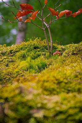 Photograph - Moss Close-up With A Small Branch With Red Leafs by Vlad Baciu