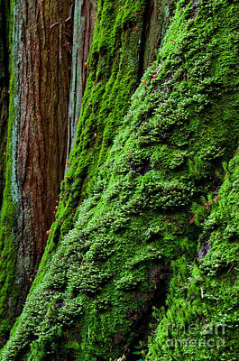 Vintage Buick - Moss Coated Tree Trunk 3 by Terry Elniski