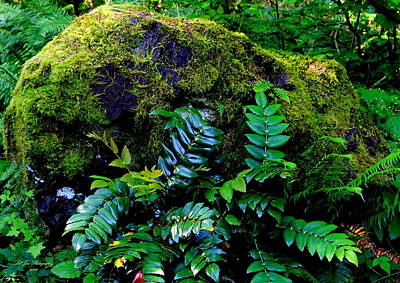 Moss Covered Boulder Photograph By Jeanette C Landstrom