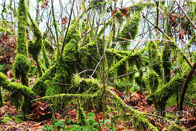 Pop Art Rights Managed Images - Moss Covered Branches Royalty-Free Image by Steven Baier