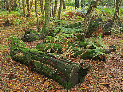 Woodland Trail Photograph - Moss Covered Logs On The Forest Floor by Gill Billington