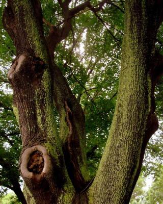 Photograph - Moss Covered Tree by Jodie Marie Anne Richardson Traugott          aka jm-ART