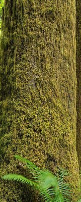 Olympic National Park Photograph - Moss Covered Tree Olympic National Park by Steve Gadomski