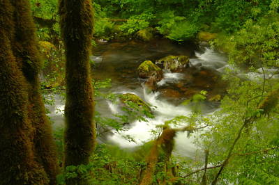 Moss Covered Trees Foregound Eagle Creek Art Print by Jeff Swan