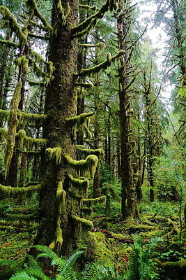 Olympic National Park Photograph - Moss by David Andersen